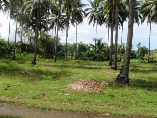 Raw land for sale in Valencia, Negros Oriental, Philippines 002