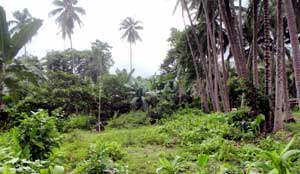 Raw Land Beach Property Philippines For Sale